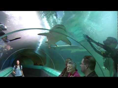 English Bites - Series 9, Episode 4: Swim with Sharks