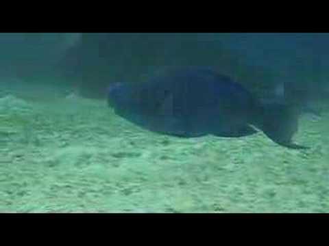 Buceo Bahamas con Stuart Coves
