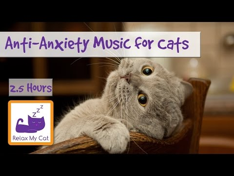 Anti-Anxiety Music for Cats and Kittens! Soothe your Cat with our Relaxation Music! �