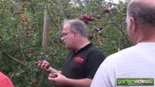 #1377 Information zur Apfelzüchtung bei Lubera (Schweizerdeutsch)