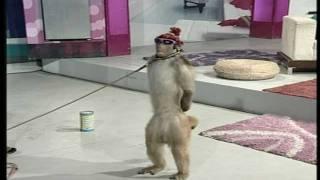Video Street Entertainer - Monkey / Goat | Life Skills TV MP3, 3GP, MP4, WEBM, AVI, FLV Maret 2018