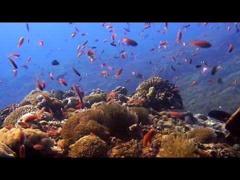 Duiken in Bali