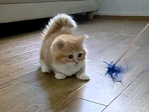 世界上最可愛最傻的小貓咪,快笑翻了!