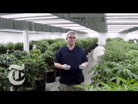 Inside the Cannabis Factory - Canada