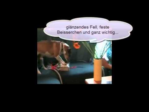 Lustiger Hund Jack Russel Terrier Mani sagt Happy Birthday Geburtstag! Totlachen garantiert!