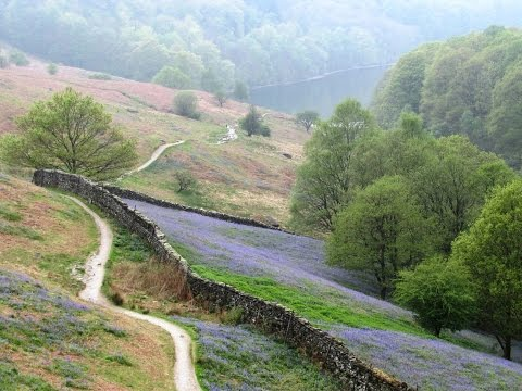 Grasmere and the Bluebells at White Moss Wood round | cumbria  Walks