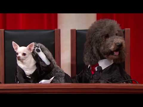 United States - Used with #RealAnimalsFakePaws footage from John Oliver's October 19, 2014 episode of Last Week Tonight. This is an uncut audio segment from the November 5th, 2013 BOND v. UNITED STATES ...