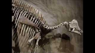 Drumheller (AB) Canada  City new picture : Royal Tyrrell Museum - Drumheller Alberta Canada - Dinosaur Museum