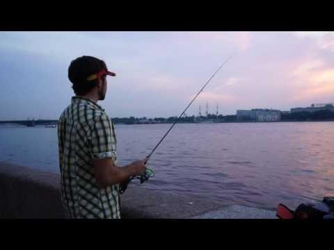 ловля судака в санкт-петербурге и ленинградской области