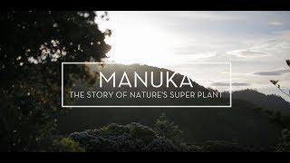 Manuka Natures Super Plant