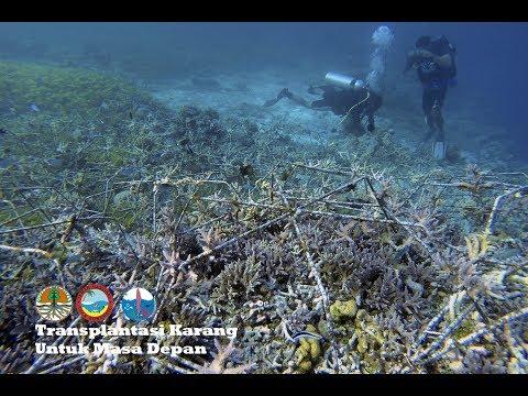 Pemulihan Habitat, Kondisi Pertumbuhan Transplantasi Karang di Perairan Jinato #TakaBonerate