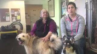 Introduction to Great Dog Daycare & Canine Education, Arousal Play