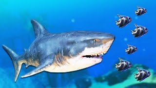 Welcome back to Feed and Grow Fish Gameplay! Feed and Grow Fish Update just got a new snakehead! In this video of Feed and Grow Fish, we use the great white shark attack to become the biggest great white shark in the ocean!► Watch the Let's Play Feed and Grow Fish: http://bit.ly/FeedandGrowFish ►Support Blitz on Patreon: http://www.patreon.com/Blitzkriegsler- - - - -Feed & Grow: Fish Gameplay Overview:Hunt and eat other fish - simply, grow into larger beasts! Play with friends too with new Multiplayer version! Early Access GameAnimal survival game based in the fish world! You start as Bibos the fish and straight away you are ready to dive in to the waters of the mesmerizing world of Feed and Grow.- - - - -Feed & Grow Fish Swamp Update Information:Ocean map remake► New fishTwo new species of ray-finned fish have joined Feed & Grow waters. Enjoy their fine models and detailed textures.► SalmonIs a new 2nd tier fish in River map that comes with a price of 10 points, Despite their own well known taste, adult salmons in nature feed mostly on other fish - therefore there's nothing wrong about eating one of them too! ► BarracudaReplaces raptors in Ocean map, these guys often strike in group with lighting fast ambush. Barracudas have fearsome reputation due to their appearance and hunting technique.A small tip: when attacked by a hungry one - leave a piece of meat behind you, they will most likely go after it and let you go.Feed and Grow Fish Patch notes:Eating ►Fixed inability to swallow certain things despite their size being way smaller than your mouth.► Adjusted eating cooldowns - swallowing as small fish now takes a little longer.►Temporarily disabled fruit plants. ► Improved & smoothed sucking and devouring animations.Camera and rendering►You can now look around your fish while holding middle mouse button.►When spawing with a new fish zoom is no longer maxed in.►New image effects: Advanced motion blur, Vignette, Chromatic abberation when playing on Fantastic quality.►