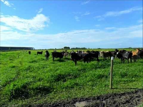 Produção de leite a pasto Extremo Sul da Bahia