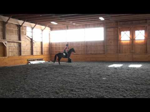 Samson Jumping -- Sold
