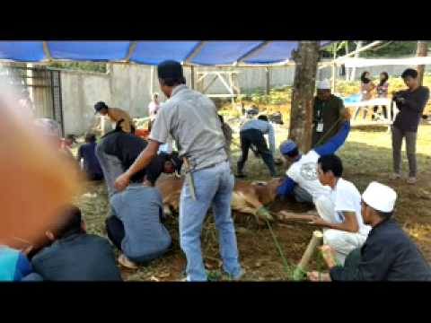 Berqurban Bersama Irena Center 1435 H