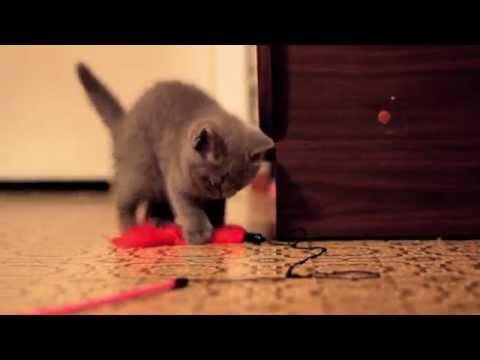Продам котёнка в Мурманске 70 08 74