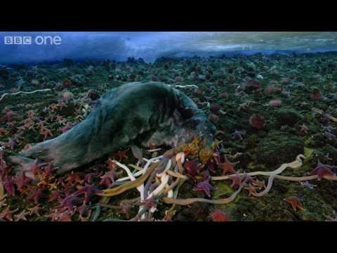 攝影隊南極發現巨型蠕蟲 專家警告恐反攻人類?