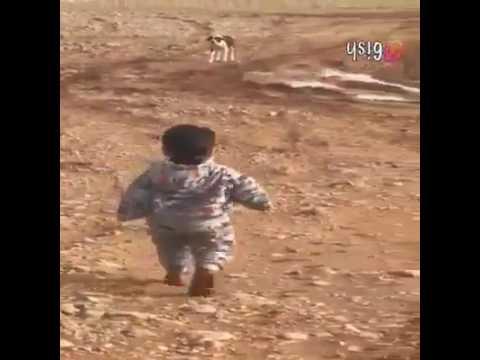 Video طفل يهرب من كلب مضحك هههههه download in MP3, 3GP, MP4, WEBM, AVI, FLV January 2017