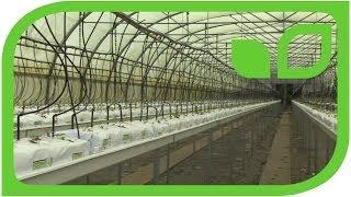 Moderne Erdbeervermehrung bei Lubera
