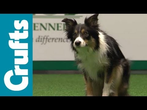 agility - Agility - International - Large - Agility Finals - Crufts 2012.