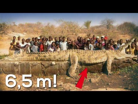 le creature più grandi di cui non crederai all'esistenza