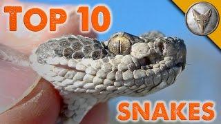 Video Top 10 Snake Encounters! MP3, 3GP, MP4, WEBM, AVI, FLV Februari 2018