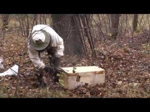 ловля пчелиного роя видео