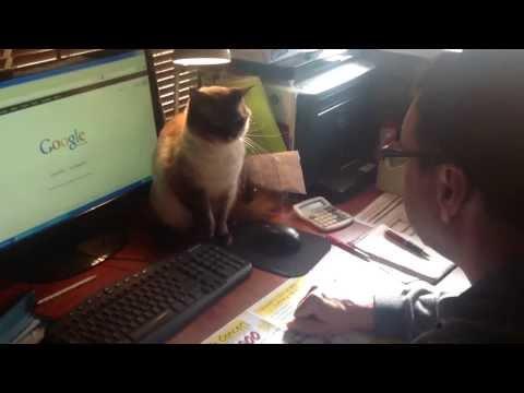 Cuando tienes que estudiar y tu madre le pide al gato que te controle...