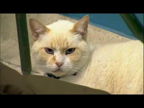 Conheça o gato que frequenta as aulas de uma faculdade