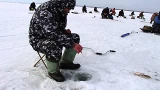 Зимняя рыбалка, окунь, ерш. Обское водохранилище. Новосибирск 04.2013