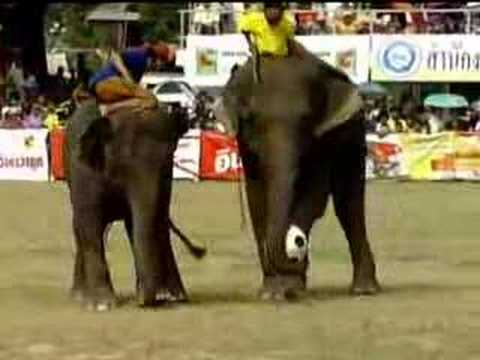Elephant Football