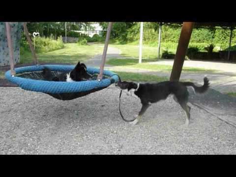 diy dog playground diy backyard dog playground woodworking diy plan