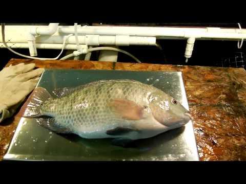 #13 – Small Scale Indoor Aquaculture in Ohio