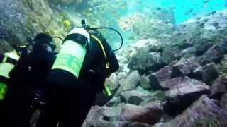 South West Rocks Australia  City pictures : Diving with SHARKS- South West Rocks, East Coast ,Australia. 2015 (GoPro)