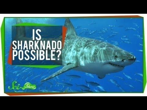 科學秀 :「 鯊魚龍捲風 」有可能嗎?