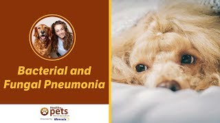 Dr. Becker on Bacterial and Fungal Pneumonia