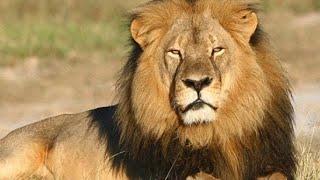 África do Sul Selvagem
