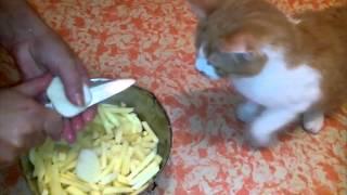 Кот бросается на нож ради картошки