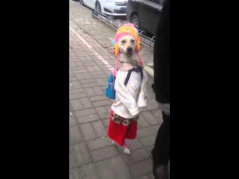 Chien en costume de petite fille