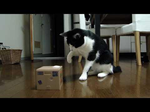 「[ネコ]エンドレスバトル。猫が出てくる貯金箱と遊ぶ猫がかわゆい。」のイメージ