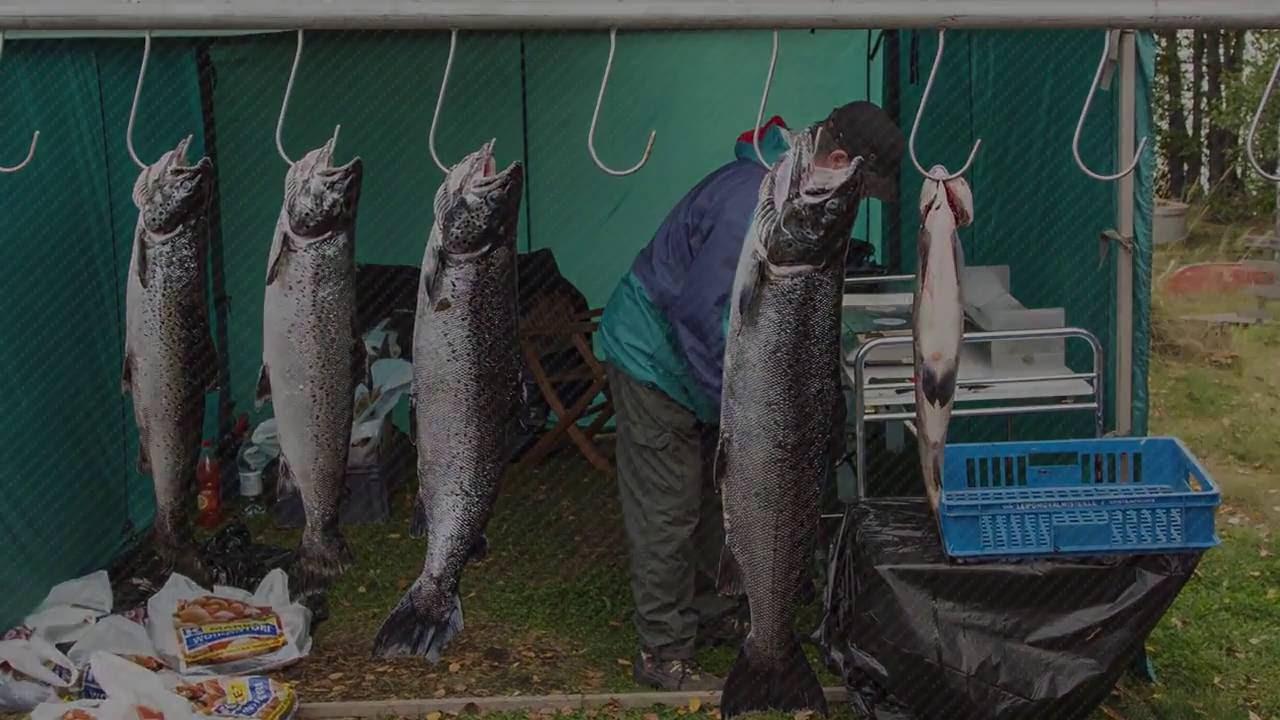 Соревнование по рыбной ловли | Рыбалка троллингом | Алюминиевый катер Faster 525 CF