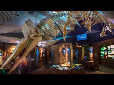 Le Centre d'interprétation des mammifères marins à Tadoussac