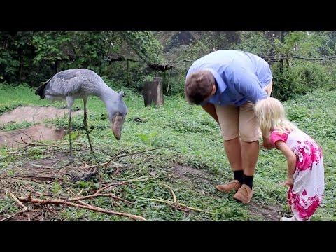 Niesamowity gigantyczny ptak! Jak się wyprostuje to padniesz!