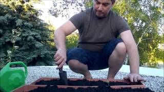 I haven't done this before but I'm sure it will work. I'm planting charentais and siberian melons and also some swiss chard plants...