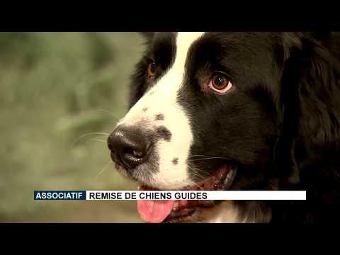 Remise de chiens guides