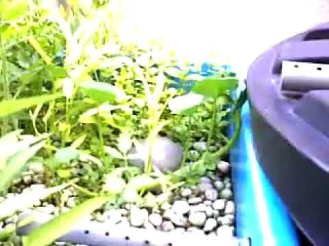Affnan's Channel – A Complete Aquaponics Video Presentation