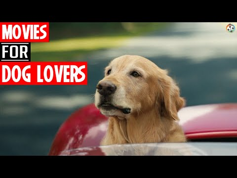 Top 5 DOG Movies from Hollywood   AboutFlick  