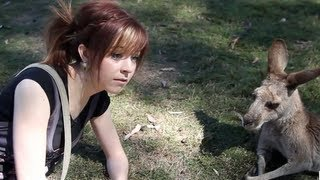 Stirling Australia  City pictures : Kangaroo Date- Lindsey Stirling