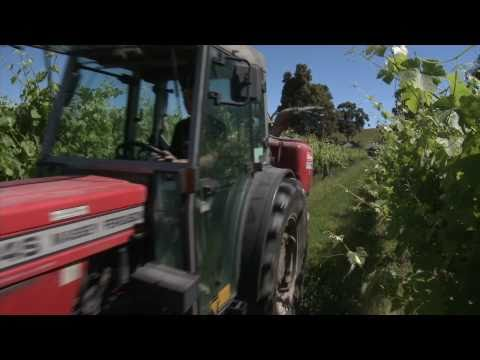 The Fergusson Winery & Restaurant, Yarra Valley - sales video